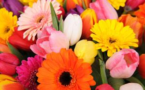 Kunterbunte Frühlingsblumen