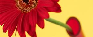 Die richtige Vase zum duften <br>Mitbringsel