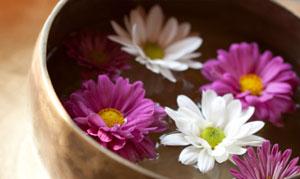 Blüten schwimmen in einem Wasserbad