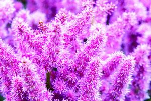 Die Schonsten Balkonpflanzen Henkel Lifetimes