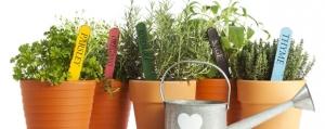 Les fines herbes: cueillette à domicile