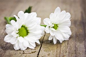 Weiße Blumen auf Holztisch als Tischdeko für White Dinner