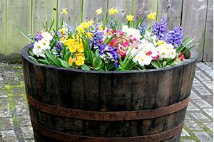 Weinfass als kreatives Pflanzgefäß für Gartendeko