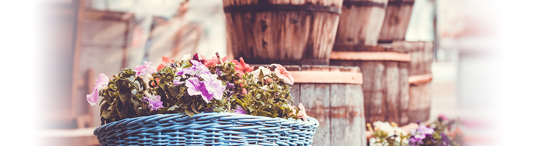 Korb als kreatives Pflanzgefäß für Gartendeko