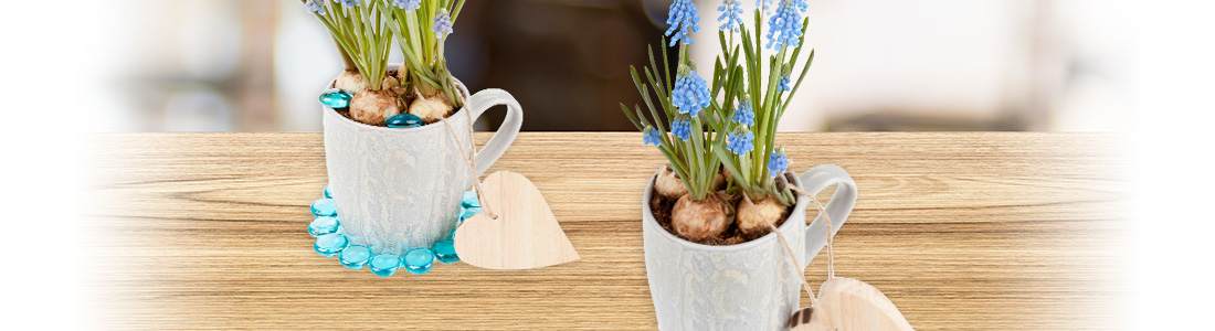 Hyazinthen in Tasse als Tischdeko & Geschenkidee