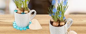 Frühlingsblumen als Tischdeko & Geschenkidee