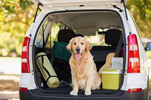 Hund in Kofferraum von Auto