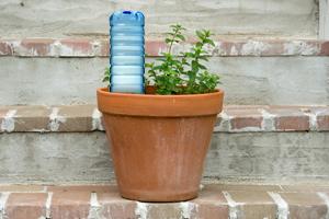 Life Hack Flasche als Pflanzensitter