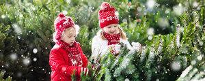 5 Tipps für den Einkauf von Weihnachtsbäumen