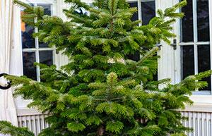 Upcycling: Weihnachtsbaum clever verwerten