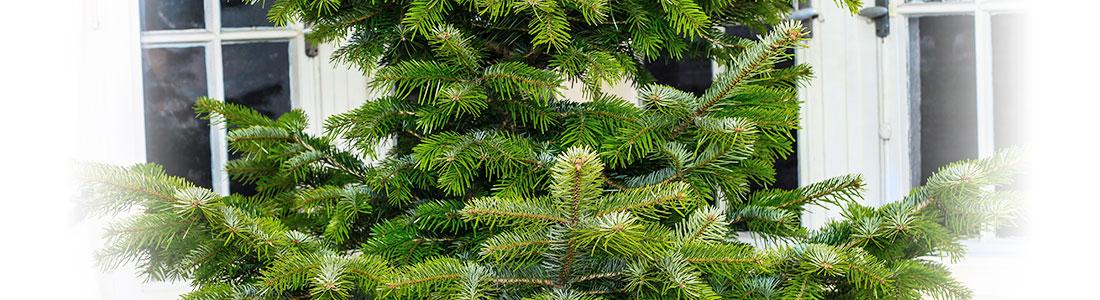 Un arbre intérieur vert