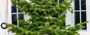 Surcyclage: valoriser le sapin de Noël