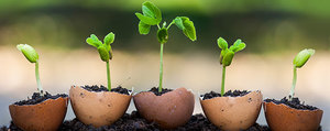 Life Hacks: Pflanzen ziehen in der Eierschale