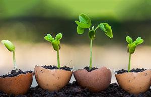 Astuces: cultiver des plantes dans une coquille