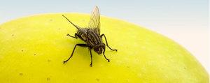 6 natürliche Hausmittel gegen Insekten in der Küche