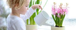Life Hacks: Einfache Tipps für Ihre Zimmerpflanzen